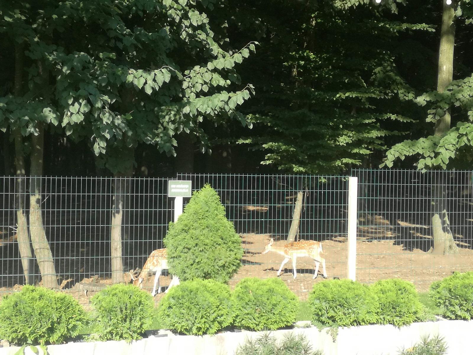 caprioare zoo Edenland