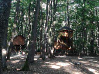 casute in copac Edenland