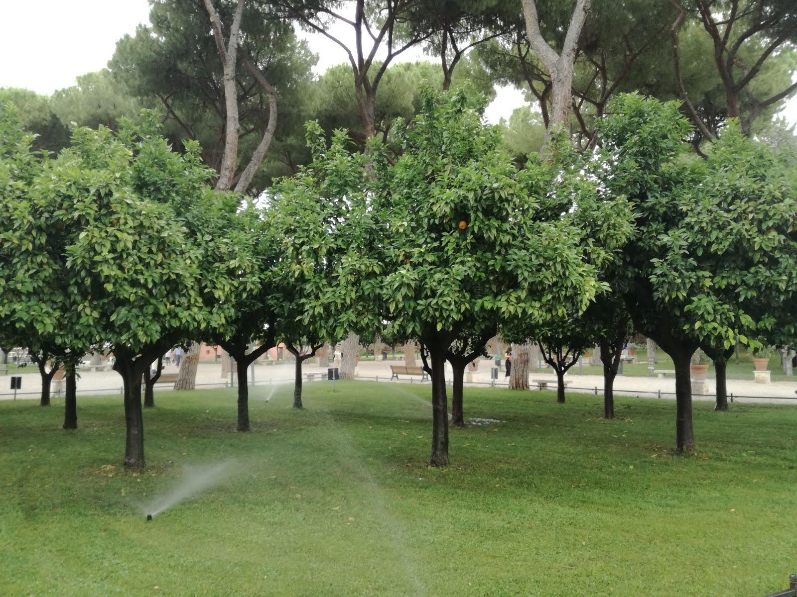 Gradina cu portocali  - Roma